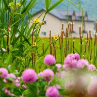 Wildflowers in full flight.