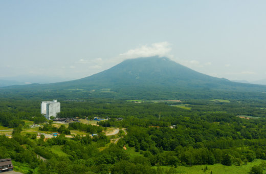 A sea of green in Niseko